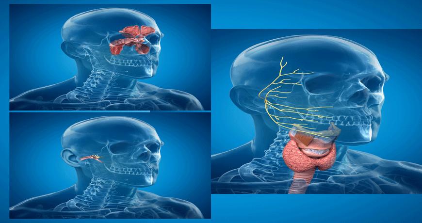 جراحة الأنف والأذن والحنجرة